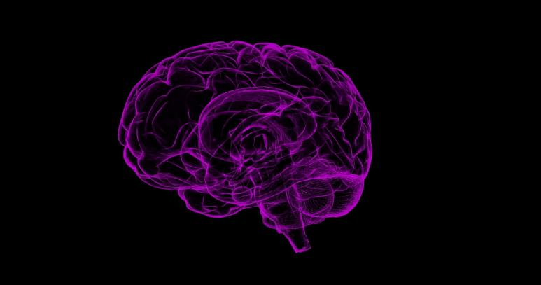 Ein menschliches Gehirn in lila, auf schwarzem Hintergrund